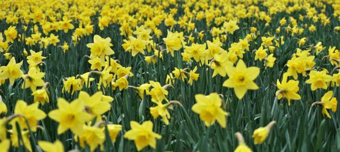 Maartse buien en voorjaarszon