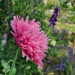 Ontdek onze tuin: de eetbare moestuin en onze bloementuin