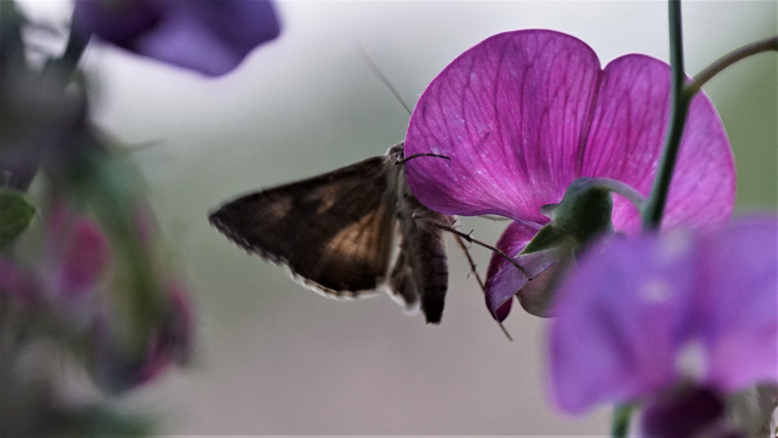 De vlinderwintertuin