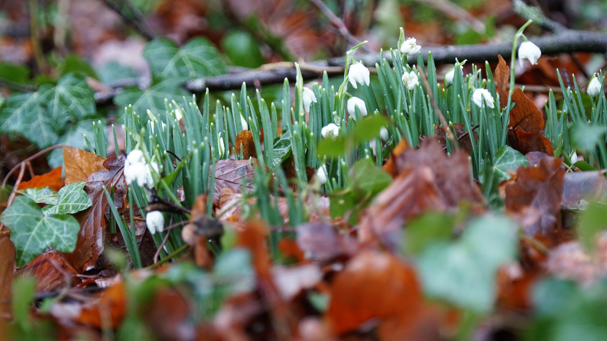 Het voorjaar ontwaakt
