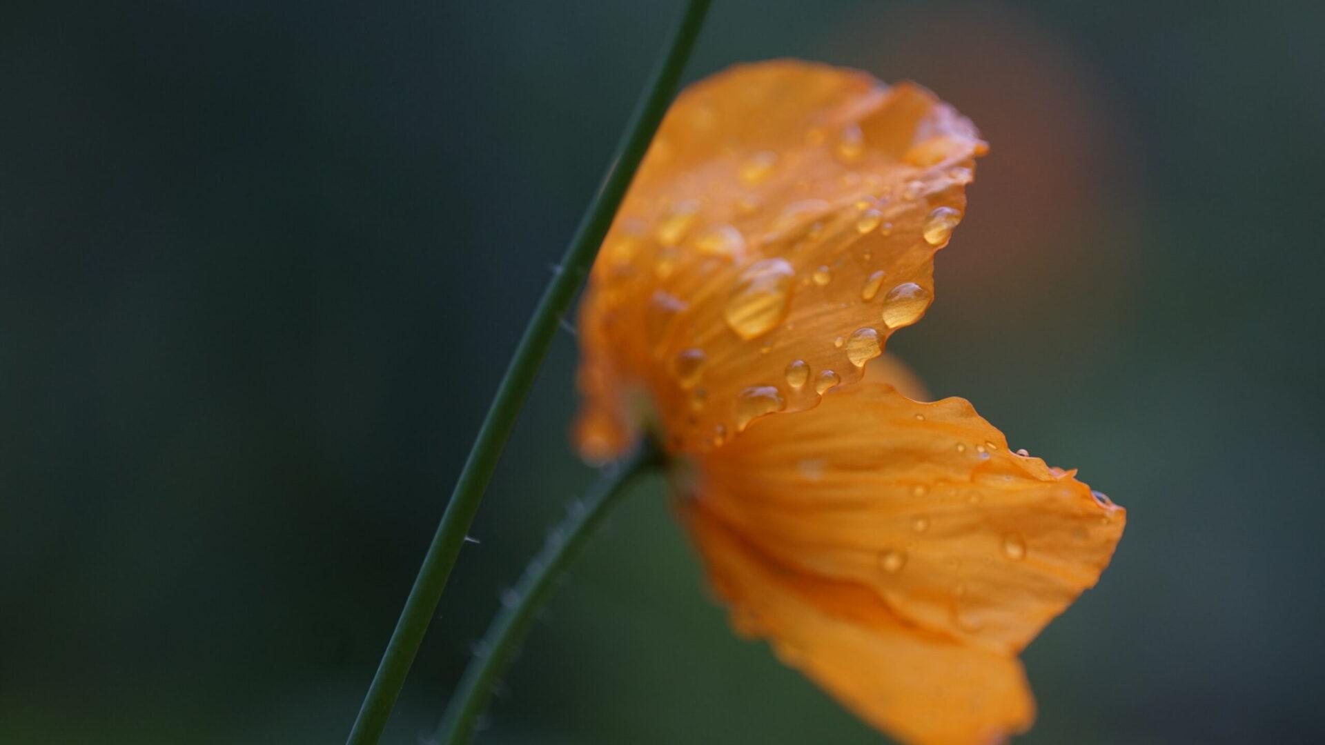 De tuin kleurt langzaam